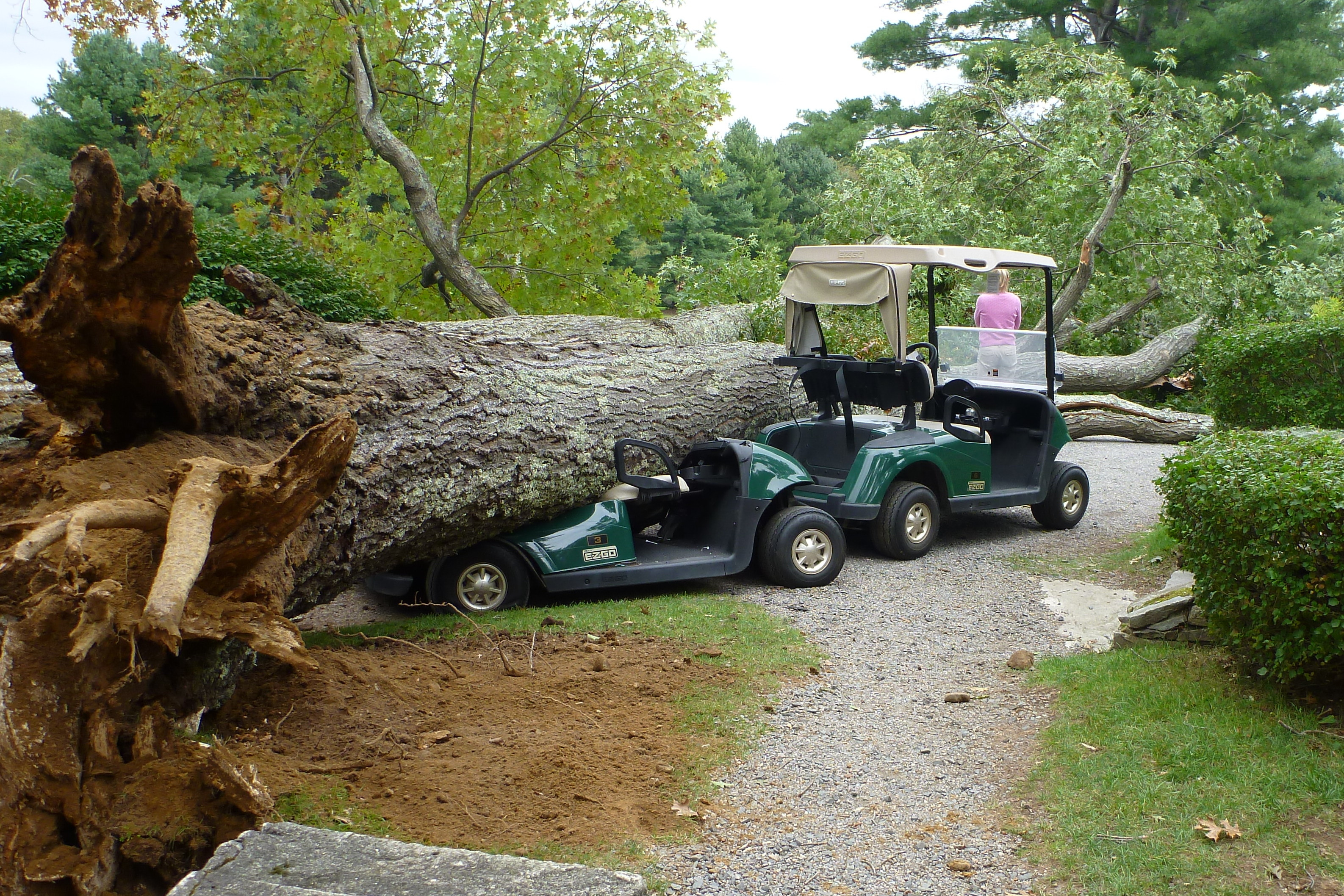 Huge Falling Tree Crushes Golf Carts | My Usual Game: David Owen on 2002 chrysler gem cart, car cart, box cart,