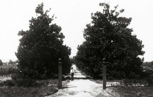Magnolia Lane, at Washington Road, 1900.